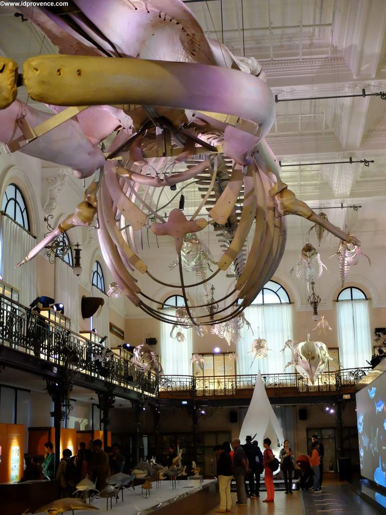 Ausstellungen im Ozeanographischen Museum Monaco