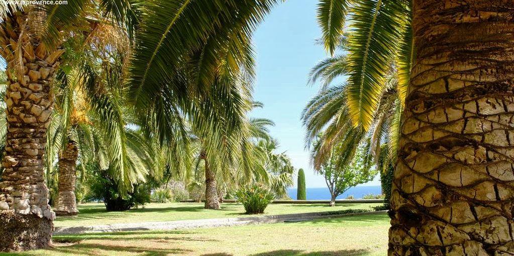 Palmen-Gärten in Monaco