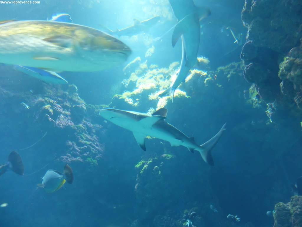 Haifischbecken im Ozeanographischen Museum Monaco