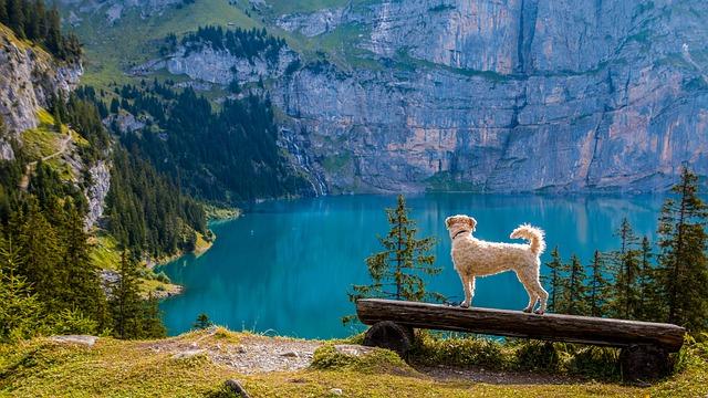 Urlaub in der Provence mit Hund. Viele Flüsse und Seen laden ein!