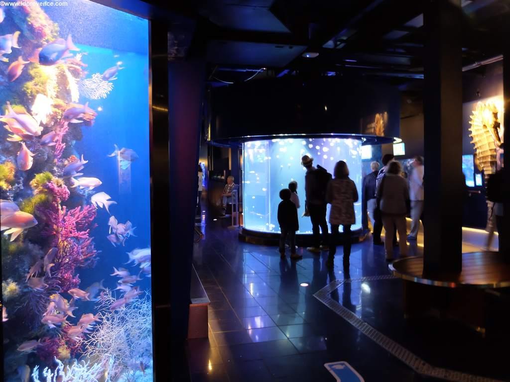 Im Untergeschoss gibt es riesige Aquarien