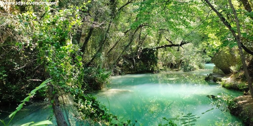 No Jungle - It's the green Provence in France!