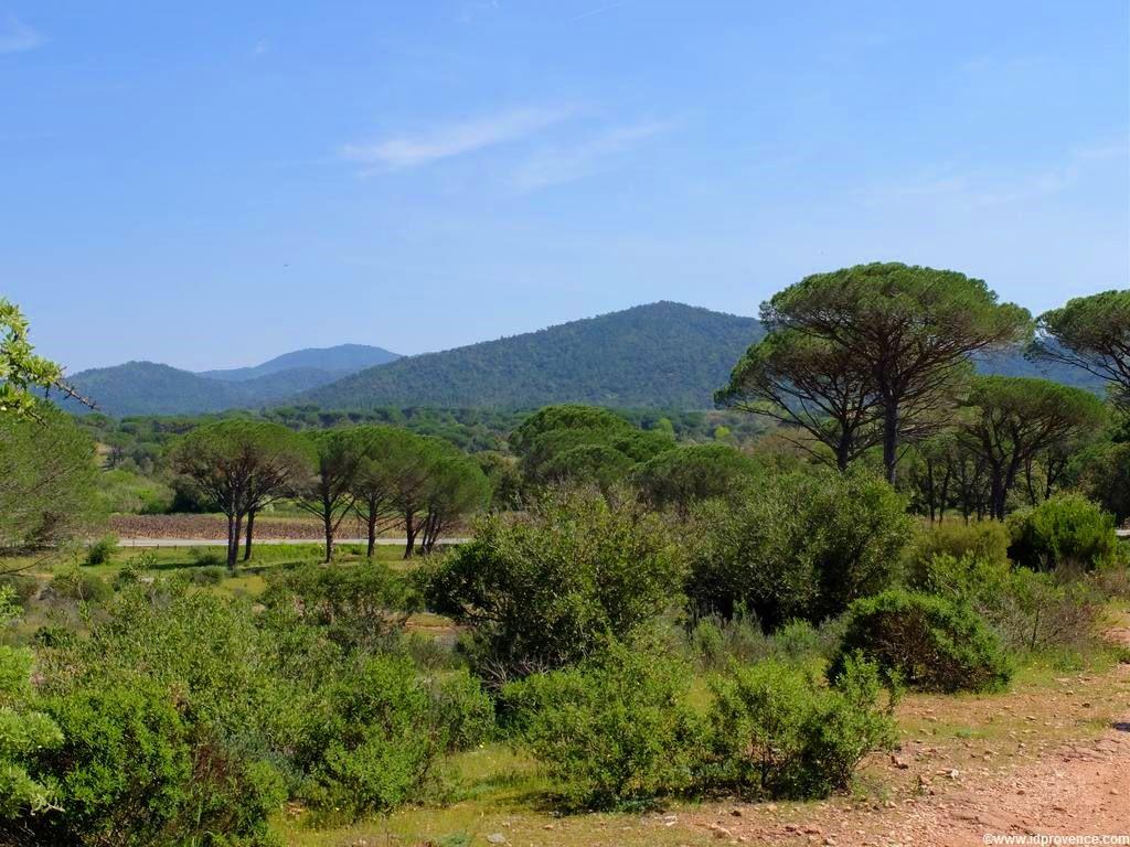 """Der See """"LAC DES ESCARCETS"""" im Naturschutzgebiet """"La plaine des Maures"""" im Mauren Massiv im Departement VAR. Wandern und Radfahren in der Provence!"""